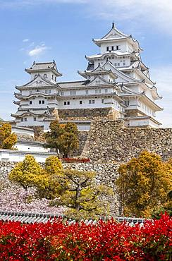 Blossoming cherry trees, Japanese cherry blossom, Himeji Castle, Himeji-jo, Shirasagijo or White Heron Castle, Prefecture Hyogo, Japan, Asia