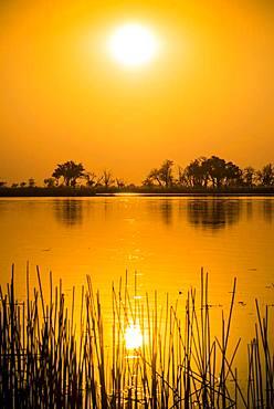 River landscape in the Okavango Delta at sunset, Moremi Wildlife Reserve, Ngamiland, Botswana, Africa