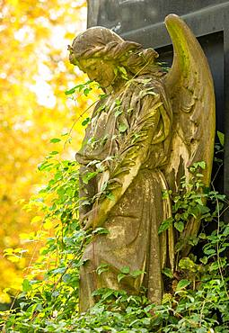 Female angel figure, praying, with star on the crown, entwined with climbing plants, autumn light, historical tomb on cemetery, Friedhoefe an der Bergmannstrasse, Berlin-Kreuzberg, Berlin, Germany, Europe