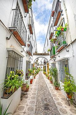 Alley decorated with flowers and plants with white houses, Calle Indiano, Cordoba, Cordoba Province, Andalusia, Spain, Europe