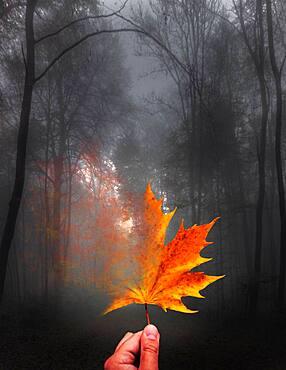 Digital Composing, symbol photo transience, autumn leaf, maple leaf dissolves, Germany, Europe
