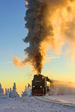 Brockenbahn travels through snowy Spruces (Picea) to the Brocken in the evening light, Harz, Schierke, Saxony-Anhalt, Germany, Europe