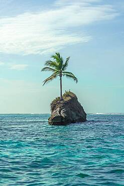 Single palm tree on rocks in water, Caribbean, Escudo de Veraguas, Panama, Central America