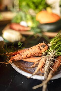 Freshly harvested organic carrots, in the background other vegetables from the garden, Irschen, Carinthia, Austria, Europe