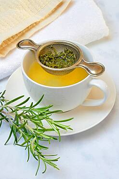 A cup of rosemary tea with tea strainer, rosemary branch, Germany, Europe