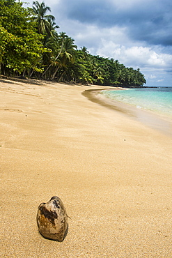 Coconut on Banana beach, Unesco biosphere reserve, Principe, Sao Tome and Principe, Atlantic Ocean, Africa