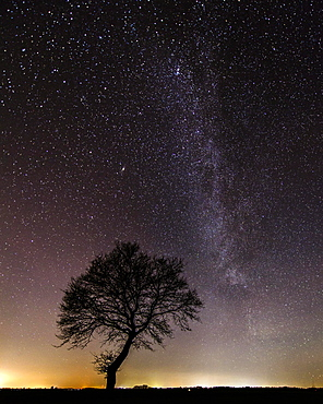 Stars in the sky above a tree, Goldenstedter Moor, night, Milky Way, Germany, Europe
