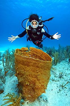 Diver looking at Giant Barrel Sponge (Xestospongia muta) in coral reef, Caribbean, Dominican Republic, Central America - 832-389956