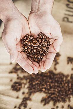 Coffee beans in hand in the shape of a heart