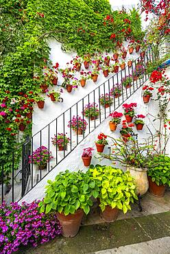Stairs with flower decorated inner courtyard, geraniums in flower pots on the house wall, Fiesta de los Patios, Cordoba, Andalusia, Spain, Europe
