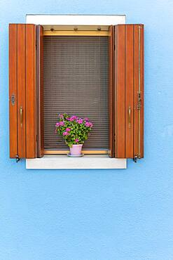 Blue wall, window with flower decoration, colorful house wall, colorful facade, Burano Island, Venice, Veneto, Italy, Europe
