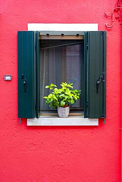 Red wall with window and flower decoration, colorful house wall, colorful facade, Burano Island, Venice, Veneto, Italy, Europe