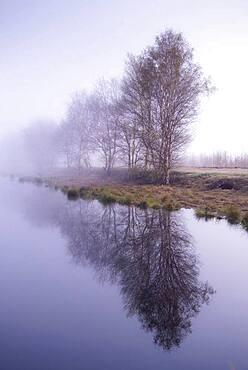 Leafless birches on the bank in the moor at morning fog, Goldenstedter Moor, Oldenburger Muensterland, Lower Saxony, Germany, Europe