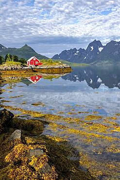 Red fishing hut on the shore, Rorbuer hut, Fjord Raftsund and mountains, Vesteralen, Norway, Europe