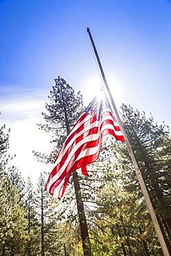 Dramatic half mast american flag among trees