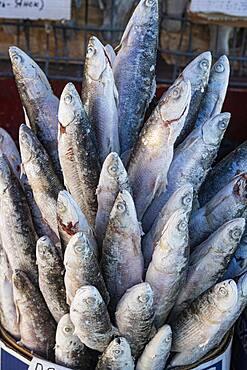 Deep frozen fish at the Fish and meat market, Yakutsk, Sakha Republic, Russia, Europe