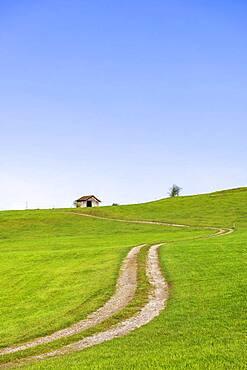 Landscape near Rieden am Forggensee, Ostallgaeu, Allgaeu, Swabia, Bavaria, Germany, Europe