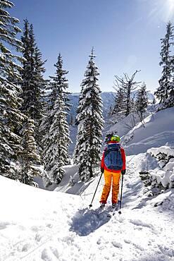 Young woman on ski tour, ski tourers, descent from Teufelstaettkopf, Ammergau Alps, Unterammergau, Bavaria, Germany, Europe