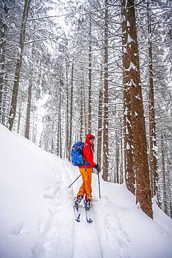 Ski tourers, young woman on ski tour to Taubenstein, Mangfall Mountains, Bavarian Prealps, Upper Bavaria, Bavaria, Germany, Europe