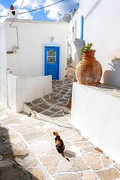 Cat in an alley, Lefkes, Paros, Cyclades, Aegean Sea, Greece, Europe