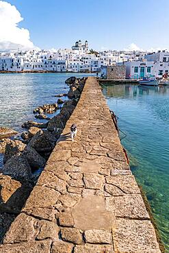 White and black cat on harbour wall, harbour town Naoussa, island Paros, Cyclades, Greece, Europe