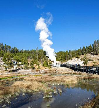 Mud Volcano, steaming thermal spring in the back, Dragon's Mouth Spring, Yellowstone National Park, Wyoming, USA, North America