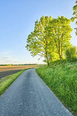 Wanderweg im Fruehling bei Kiefenholz, Vorderer Bayerischer Wald, Oberpfalz, Bayern, Deutschland