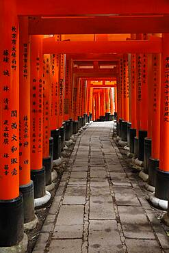 Famous torii gates on the path to Fushimi Inari Taisha shrine on Mount Inari in Kyoto, Japan, Asia