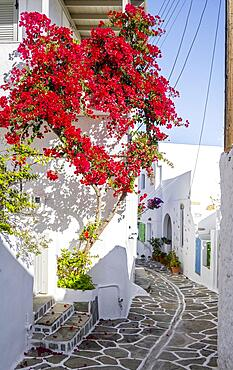 White-blue houses with flowering bougainvillea (bougainvillea), old town of Lefkes, Paros, Cyclades, Greece, Europe