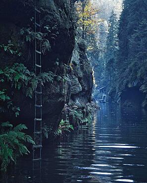 Ladder in Kamnitzklamm, also known as Edmundsklamm, is a rocky gorge between Hrensko Herrnskretsche, Mezna and Srbska Kamenice in Bohemia, in the Czech Republic. The Kamnitz River flows through it, Switzerland, Europe