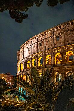 The Colosseum with palm tree, illuminated at night, Rome, Italy, Europe