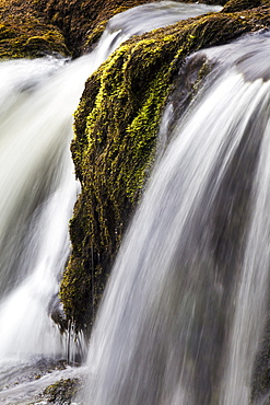 Moss and water at Redmire Force near Swinithwaite in Wensleydale, Yorkshire Dales, Yorkshire, England, United Kingdom, Europe