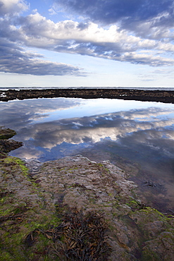 Rock Pools on the Beach at Robin Hoods Bay, Yorkshire, England, United Kingdom, Europe