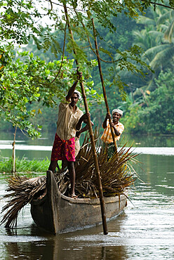 Locals transporting palm leaves on the Backwaters, near Alappuzha (Alleppey), Kerala, India, Asia