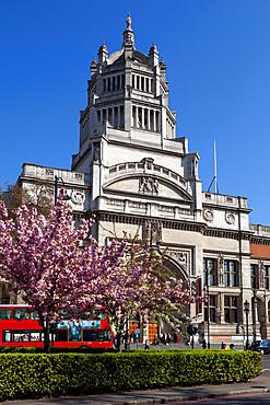 Victoria and Albert Museum with cherry blossom trees, Kensington, London, England, United Kingdom, Europe