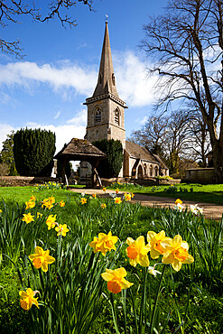 The Parish Church of St. Mary with spring daffodils, Lower Slaughter, Cotswolds, Gloucestershire, England, United Kingdom, Europe