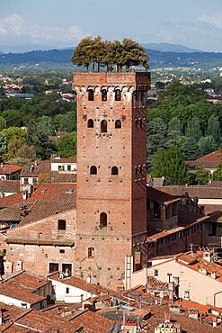 Torre Guinigi topped by Holm oak tree, Lucca, Tuscany, Italy, Europe
