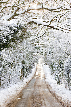 Road going through snow covered woodland trees, Broadway, Cotswolds, Worcestershire, England, United Kingdom, Europe