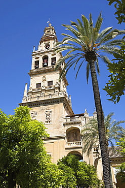 Torre del Alminar belfry of the Mezquita viewed from the Patio de los Naranjos, Cordoba, Andalucia, Spain, Europe