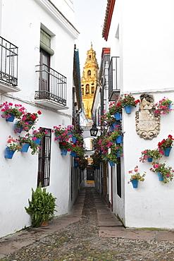 Calleja de las Flores and the Mezquita, Cordoba, Andalucia, Spain, Europe