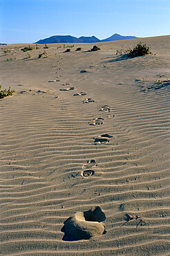 Footprints through sand dunes, near Corralejo, Fuerteventura, Canary Islands, Spain, Europe