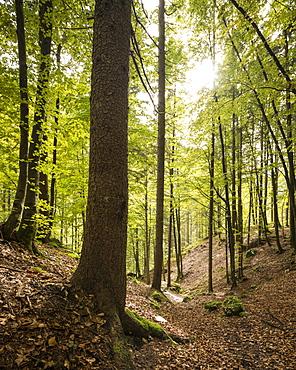 Woods near Pericnik Waterfall, Triglav National Park, Upper Carniola, Slovenia, Europe