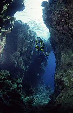 Diver swimming between coral walls