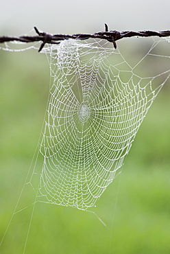 Spiderweb hanging from barbed wire, Kangaroo Valley, New South Wales, Australia - 994-19