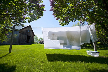 Clean sheets hanging out to dry on spring day, USA, Vermont, Dorset