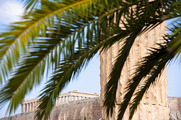 Greece, Athens, Palm fronds near Temple of Olympian Zeus
