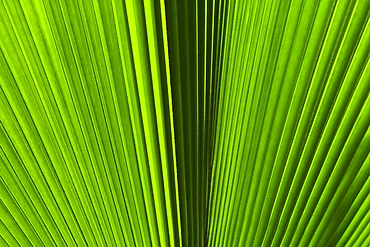 Extreme close-up view of green tropical leaf
