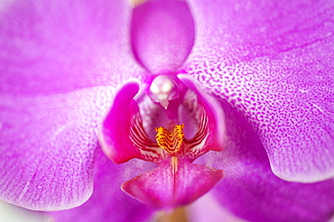 Close up of purple orchid flower