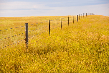 Fence in yellow prairie grass