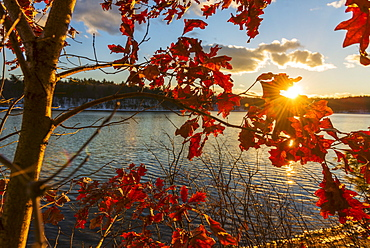 Autumn leaves, Walden Pond, Concord, Massachusetts
